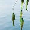 7 20 19 Lynn Freedom Fish 8