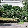 7 24 20 Swampscott tree down 3