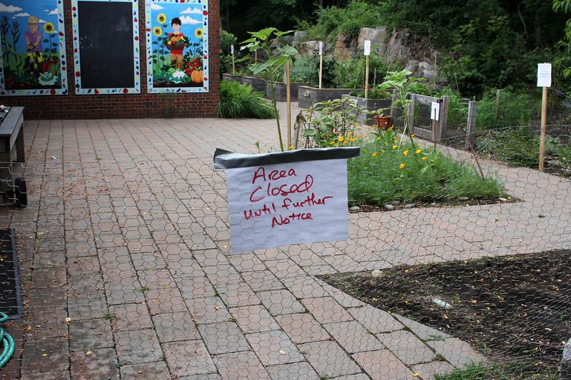 Marblehead072518-Owen-Bell School garden02