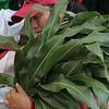 Lynn072618-Owen-Farmers market05