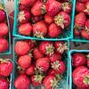 7 5 18 Lynn first farmers market of year 5
