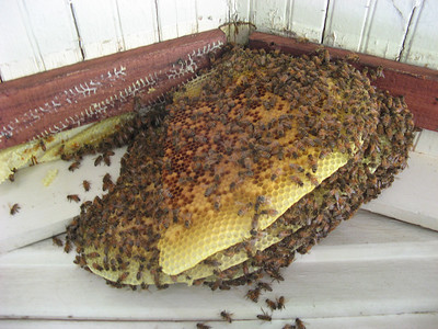 11_bees_live_removal