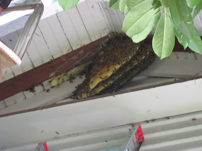 10_bees_live_removal