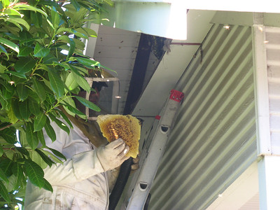 09_bees_live_removal