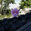 Submitted <br> Venonat, #48, was found at Lakewood Park by Ariell Mullins of Cleveland.