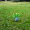 Submitted <br> Oddish, #43, was found by user Ariell Mullins of Cleveland.