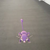 Submitted<br /> Rattata, the small rodent Pokemon, was found at the Cleveland Clinic main campus by Ariell Mullins of Cleveland.