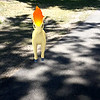 Submitted <br> Ponyta, the equine Pokemon, was found at Lakewood Park by Ariell Mullins of Cleveland.