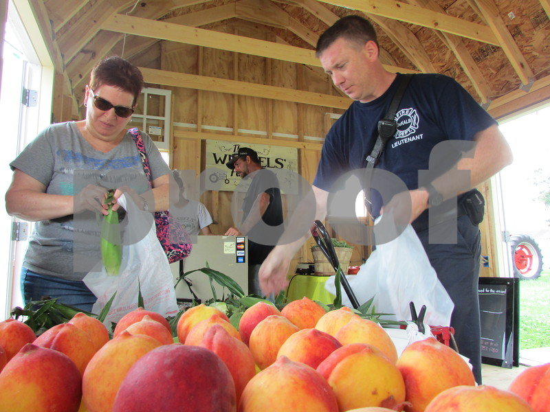 Photos by Christopher Heimerman - cheimerman@shawmedia.com<br /> Jean Hawkins (left) of Cortland and DeKalb Fire Lt. Tim Morey pick and bag ears of corn Friday morning at Wessels' Family Farm's stand at the southwest corner of Sycamore and Greenwood Acres roads in DeKalb. The shack is open 9 a.m. to 6 p.m. seven days a week. In addition to corn, Wessels' features many other veggies, fruit and potatoes, too, and the offerings change throughout the summer and fall.