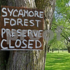 dnews_0728_Syc_Forest_COVER