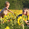 dc.0730.Shabbona sunflowers08