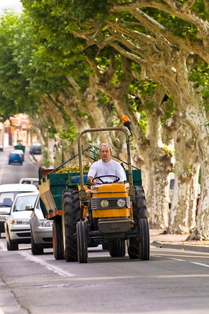 Europe, France, Provence, Beaumes-de-Venise, farmer on a tractor on a tree lined street, people, misc