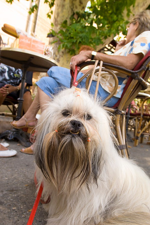 Europe, France, Provence, Malaucene, local women and their dogs meeting in a cafe