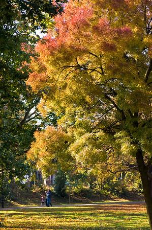 Autumn in Ealing Common, W5, London, United Kingdom