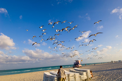 United States Of America, Florida, Miami, South Beach, beach, man feeding seagulls