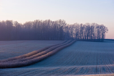 Rural landscape covered in morning frost, Poland