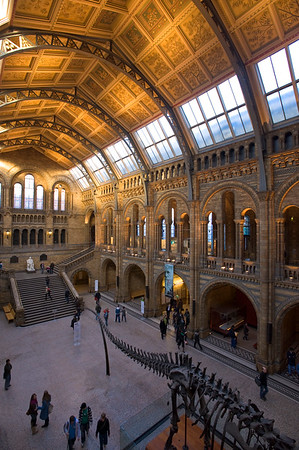 Main Hall of Natural History Museum, London, United Kingdom