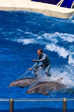 Dolphin show, Seaworld theme park, Orlando, Florida, United States of America