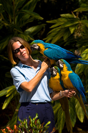 Trainer with parrots during show, Seaworld theme park, Orlando, Florida, United States of America