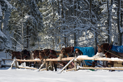 Horses in Scenic and picturesque Dolina Koscieliska, Zakopane, Tatra Mountains, Podhale Region, Poland
