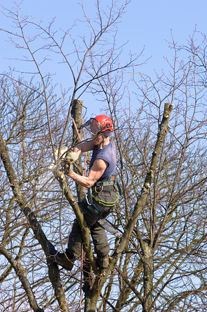 Trimming trees in Ealing, London, United Kingdom