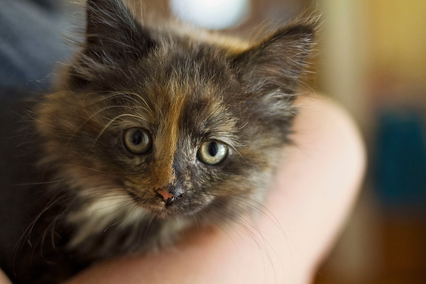 08-07-2017 Kitties