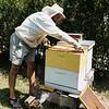 8 6 21 SRH Swampscott beekeeper Joe Douillette 8