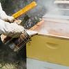 8 6 21 SRH Swampscott beekeeper Joe Douillette 9