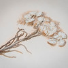 8 14 19 Nahant Library herbarium grant 1