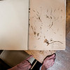 8 14 19 Nahant Library herbarium grant 2