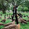 8 15 20 Lynn Common geese 2