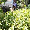 8 2 18 Lynn Cambodian gardeners 3