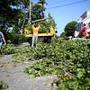 TreeDownNahant824 Falcigno 06