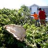 TreeDownNahant824 Falcigno 01