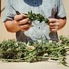 01945 Fall21 marijuana farm 3