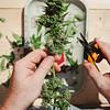 01945 Fall21 marijuana farm 5