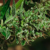 01945 Fall21 marijuana farm 10