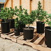 01945 Fall21 marijuana farm 7