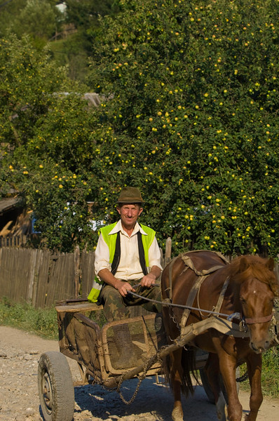 Farmer riding through a village on horse drawn cart, Buhalnita, Romania