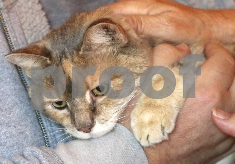 dc.0802.rescued cat03