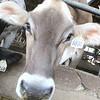 nws.080521.kinzinger.visits.sycamore