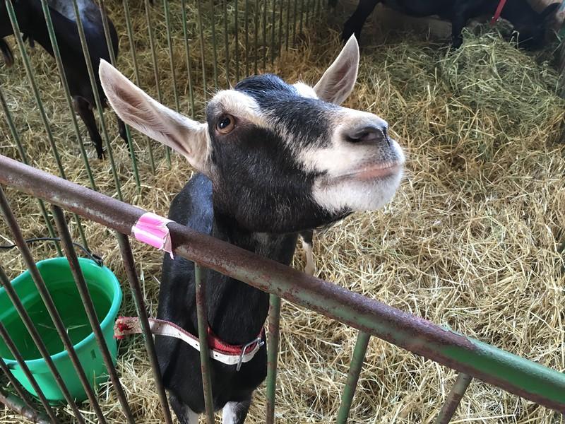 A friendly donkey (David S. Glasier/The News-Herald)
