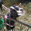 A friendly donkey (David S. Glasier/The News-Herald)