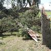 dc.0812.Walnut Grove storm damage05