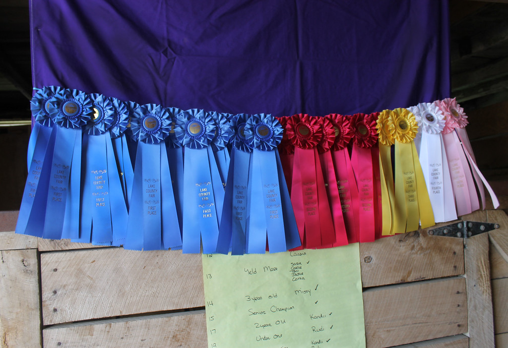 . Kailee Leonard � The News-Herald <br> Many competitors proudly display their ribbons throughout the week. Seen here are just some that were won during the Draft horse competitions that were held in the morning.