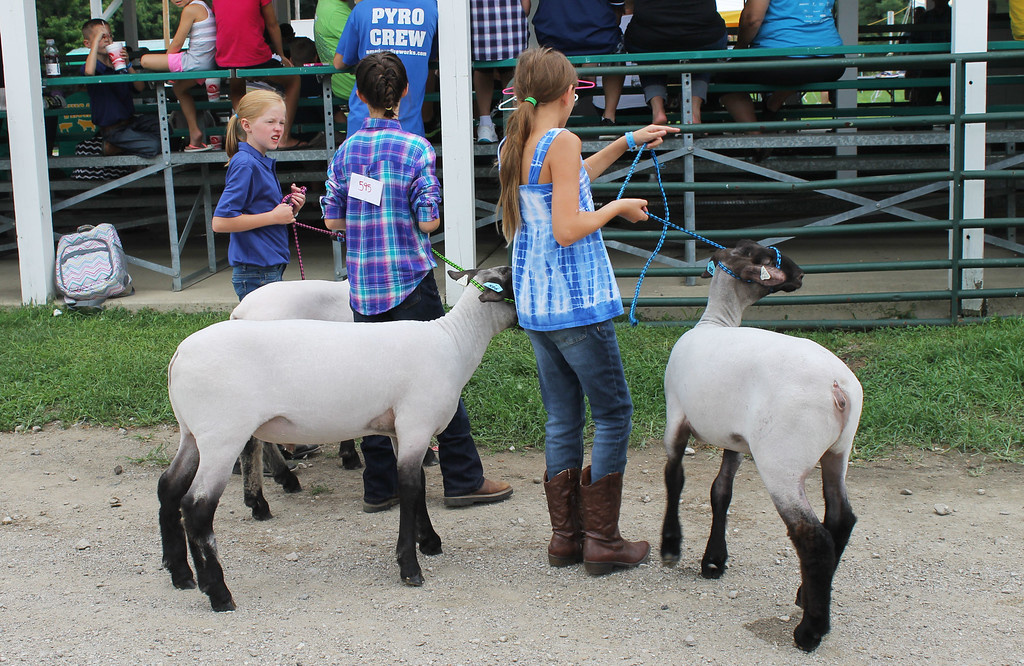 . Kailee Leonard � The News-Herald <br> A group of 4H members talk about their showmanship classes before entering the ring with their sheep.