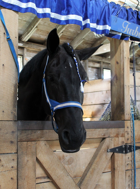 . Kailee Leonard � The News-Herald <br> Two barns on the fairground holds just draft horses. The Percheron is one of the many breeds showcased.