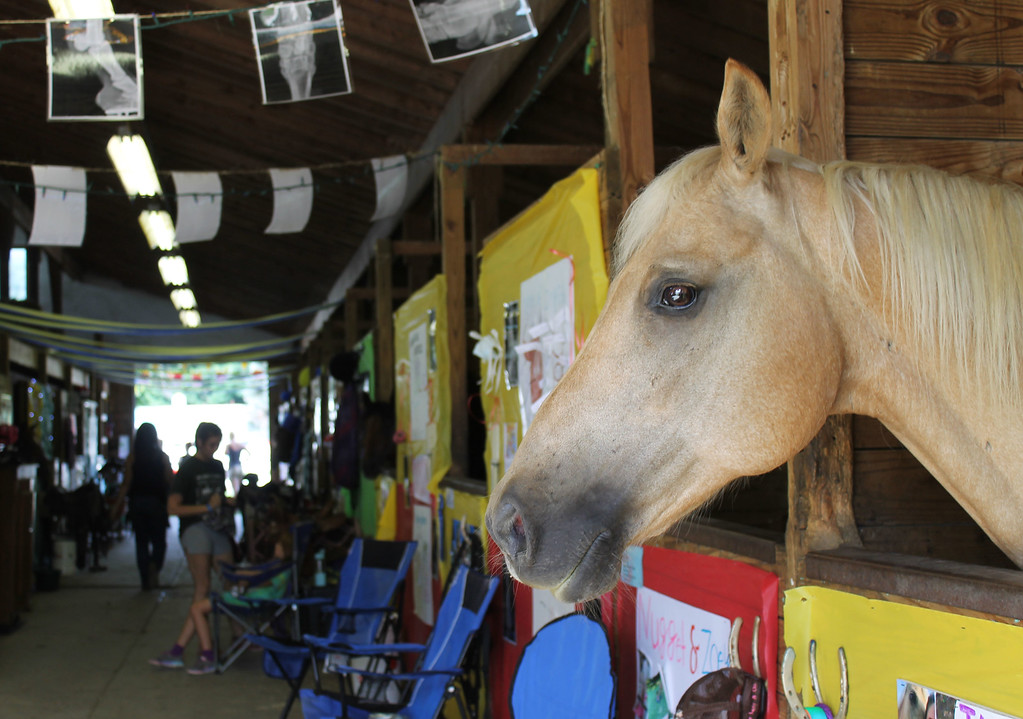 . Kailee Leonard � The News-Herald <br> \'Tang\' takes in the sights of opening day safely from his stall in Barn 10.