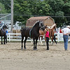 Kailee Leonard — The News-Herald <br> The opening day at Lake County Fair held many competitions. One held in the morning was the draft horse halter classes. Here, a competitor 'sets up' her horse for the judge.
