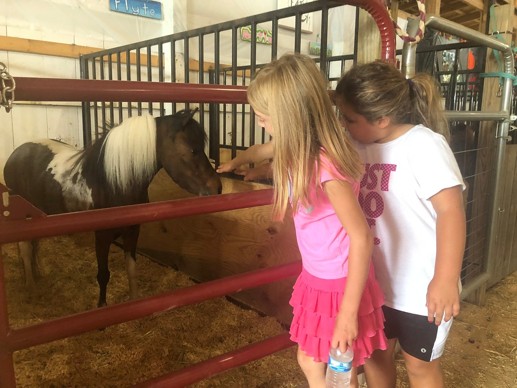 . Briana Contreras � The Morning Journal <br> Adelynn Schlechter, 7, and Elianna Duke, 6, of Henrietta Township, take a look at the mini horses at the Lorain County Fair in Wellington, and pet mini horse Ruby on Aug. 21.